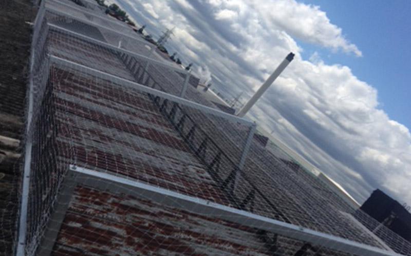 Asbestos roofing pigeon netting