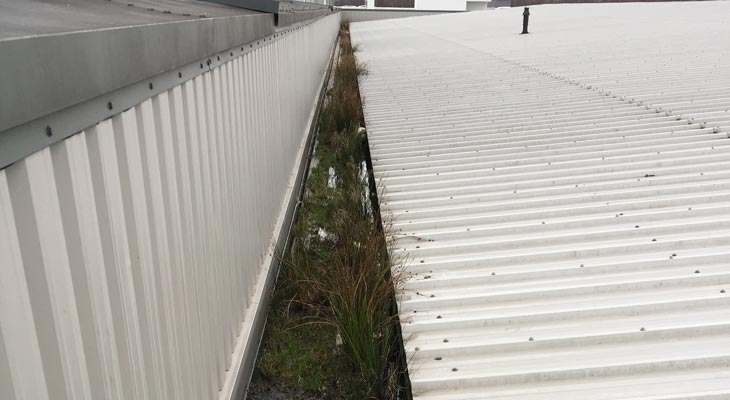 Industrial gutter in Tamworth with vegetation and debris