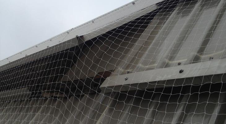 Glazed window opening under pigeon netting